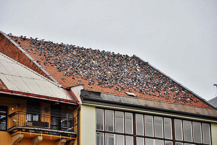 A2B Pest Control are able to install spikes to deter birds from roofs in Southgate.