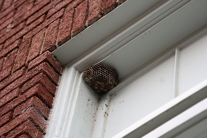 We provide a wasp nest removal service for domestic and commercial properties in Southgate.